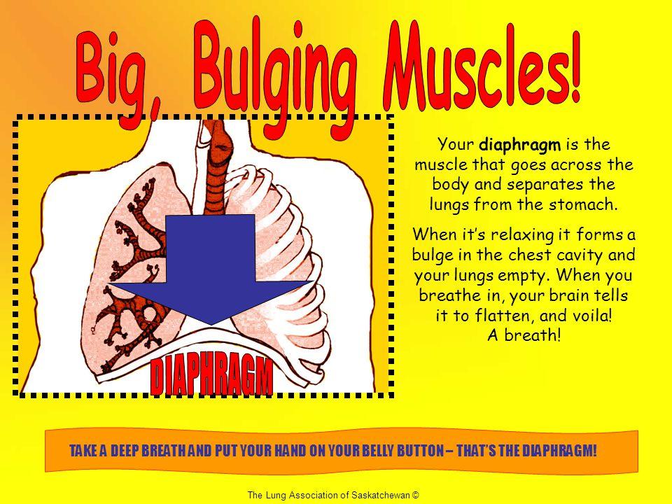 Big, Bulging Muscles! DIAPHRAGM