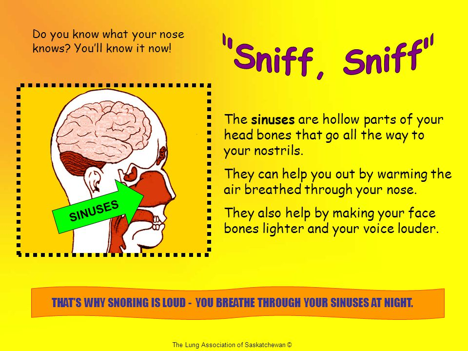 Do you know what your nose knows You'll know it now!