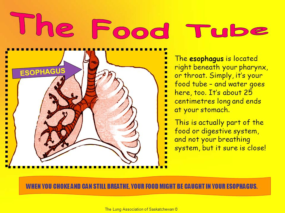 The Food Tube