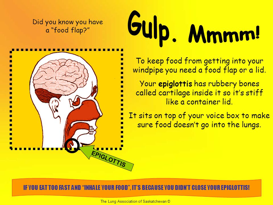 Did you know you have a food flap