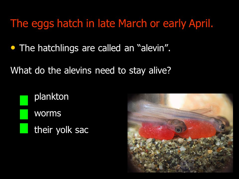 The eggs hatch in late March or early April.