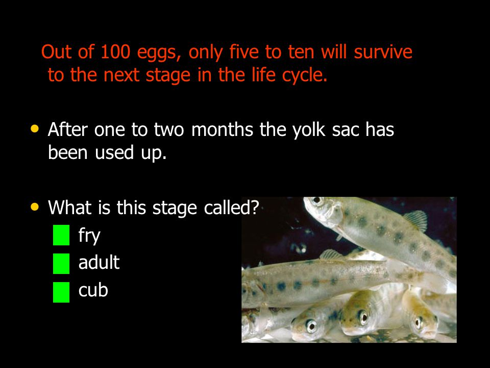 Out of 100 eggs, only five to ten will survive to the next stage in the life cycle.