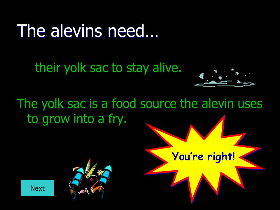 The alevins need… their yolk sac to stay alive.