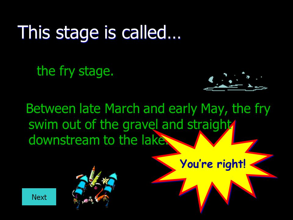 This stage is called… the fry stage.
