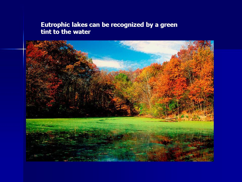 Eutrophic lakes can be recognized by a green tint to the water