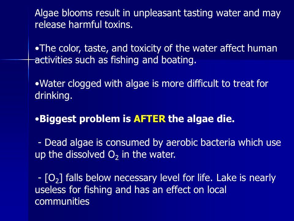 Algae blooms result in unpleasant tasting water and may release harmful toxins.