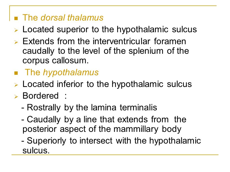 The dorsal thalamus Located superior to the hypothalamic sulcus.