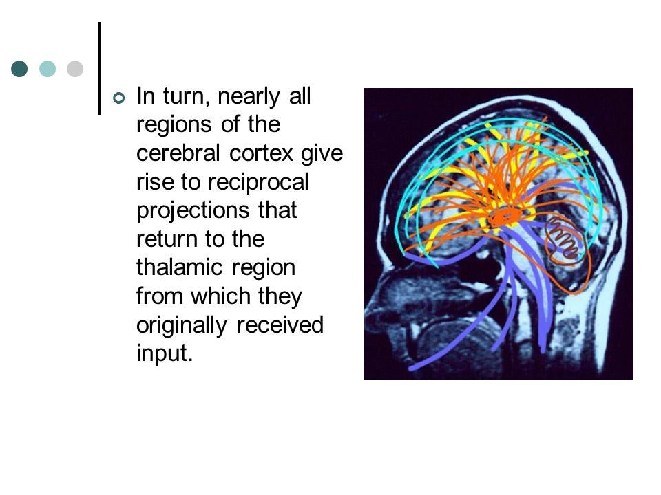 In turn, nearly all regions of the cerebral cortex give rise to reciprocal projections that return to the thalamic region from which they originally received input.