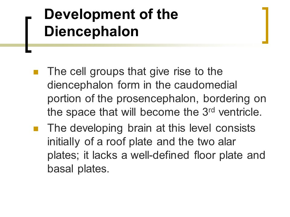 Development of the Diencephalon