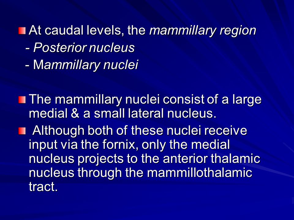 At caudal levels, the mammillary region