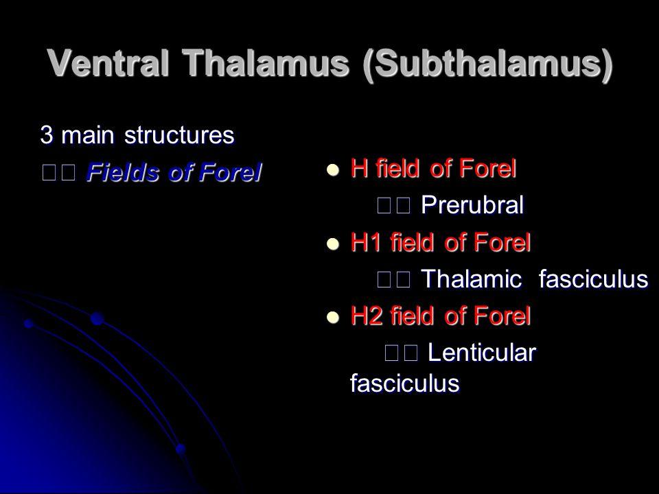 Ventral Thalamus (Subthalamus)