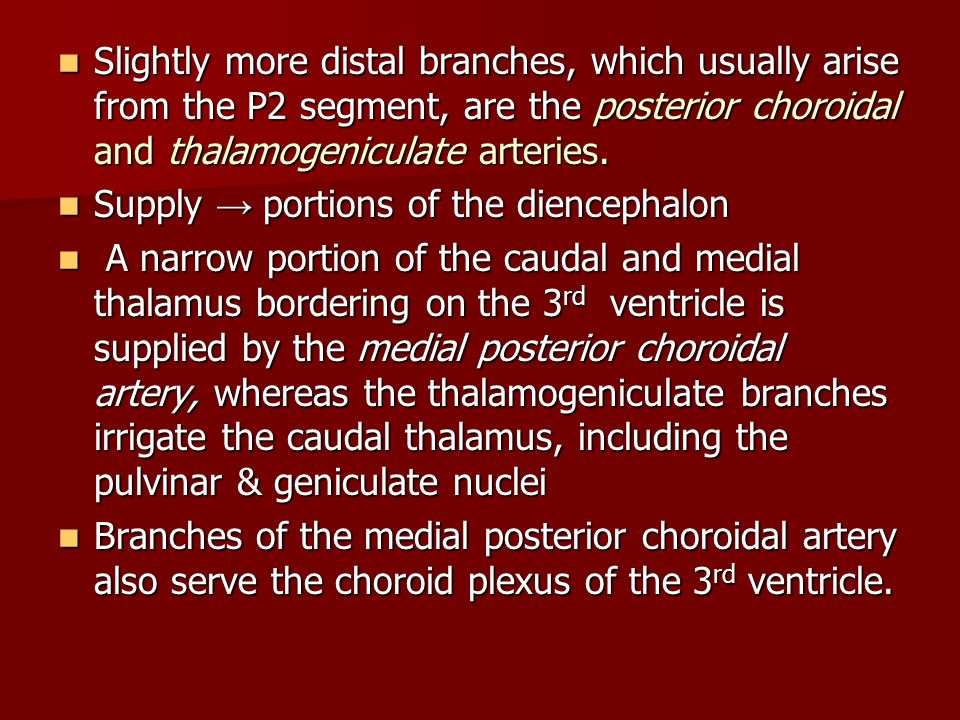 Slightly more distal branches, which usually arise from the P2 segment, are the posterior choroidal and thalamogeniculate arteries.