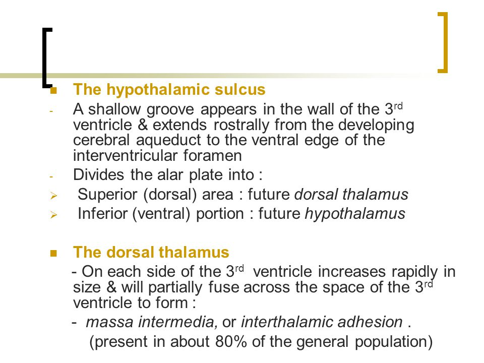 The hypothalamic sulcus