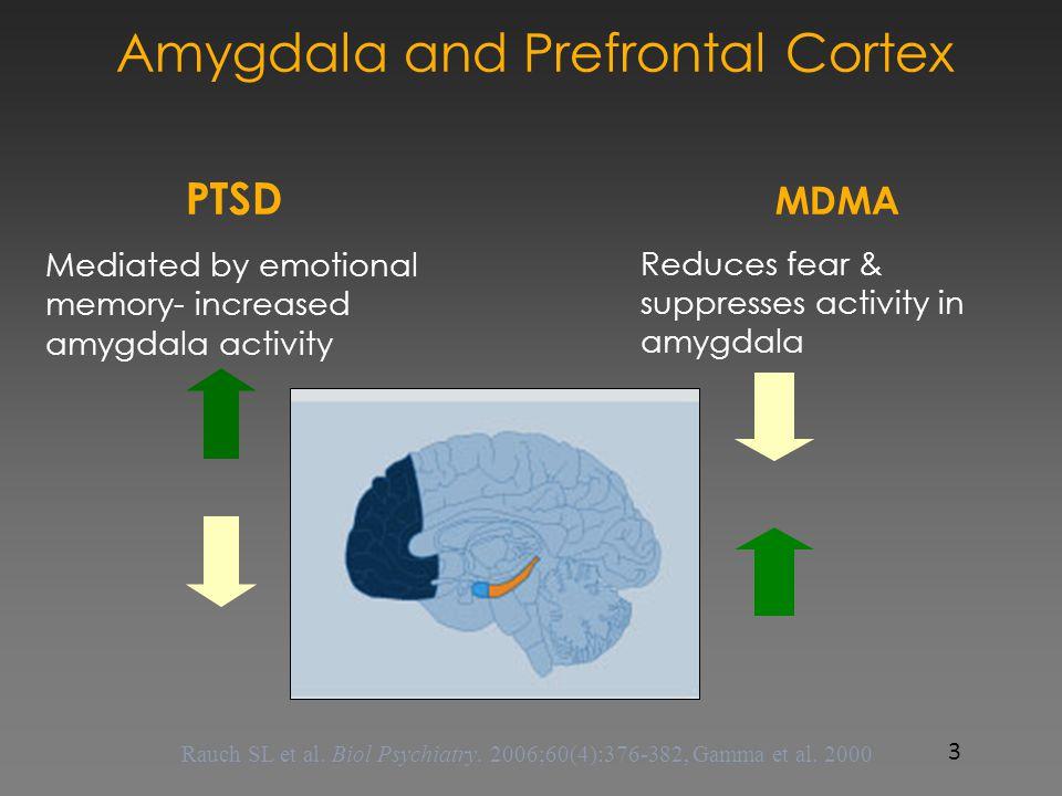 Amygdala and Prefrontal Cortex