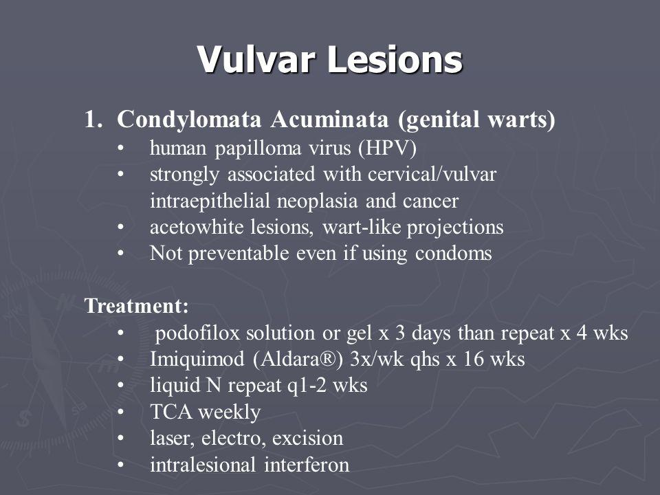 Vulvar Lesions Condylomata Acuminata (genital warts)