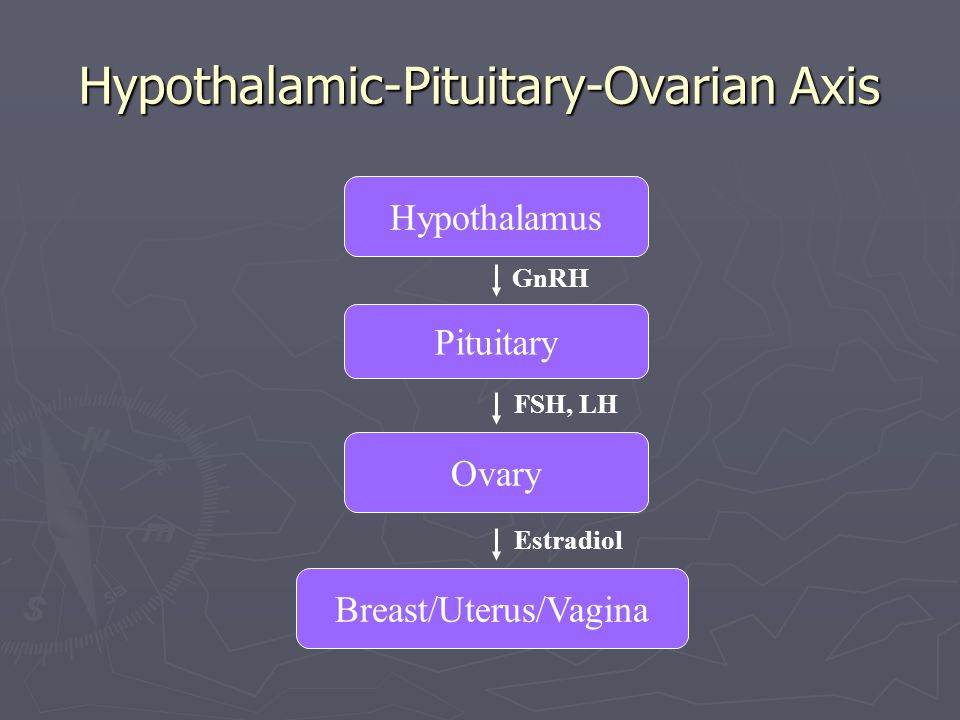Hypothalamic-Pituitary-Ovarian Axis
