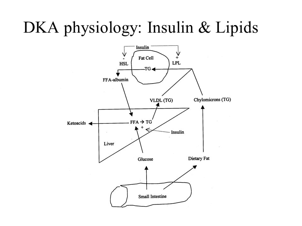 DKA physiology: Insulin & Lipids