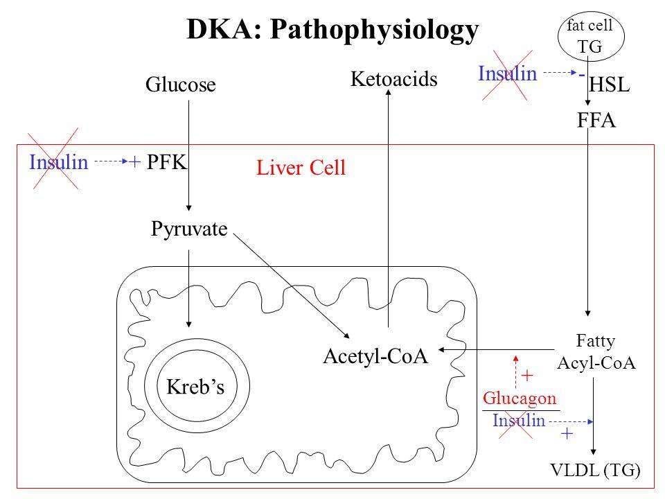 DKA: Pathophysiology Insulin - Ketoacids Glucose HSL FFA Insulin + PFK