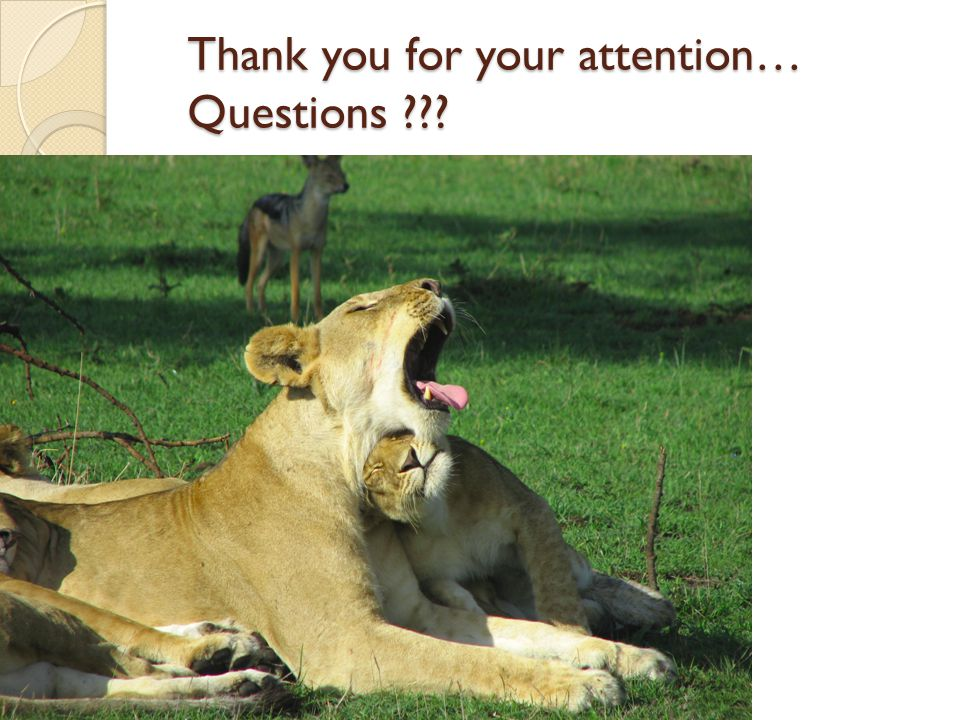 Thank you for your attention… Questions