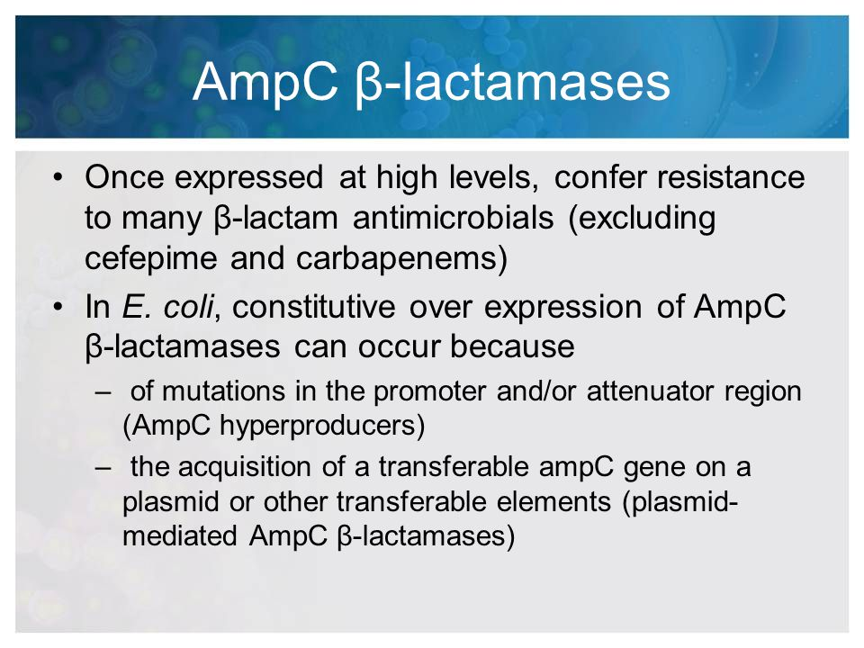 AmpC β-lactamases Once expressed at high levels, confer resistance to many β-lactam antimicrobials (excluding cefepime and carbapenems)