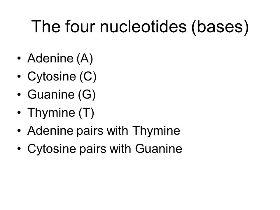 The four nucleotides (bases)