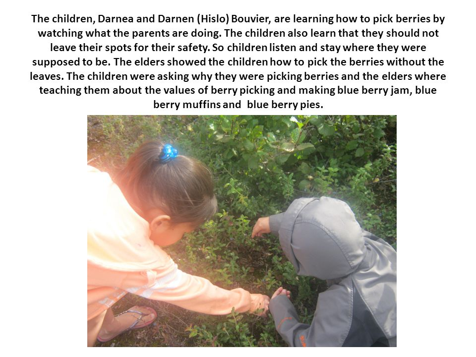 The children, Darnea and Darnen (Hislo) Bouvier, are learning how to pick berries by watching what the parents are doing.