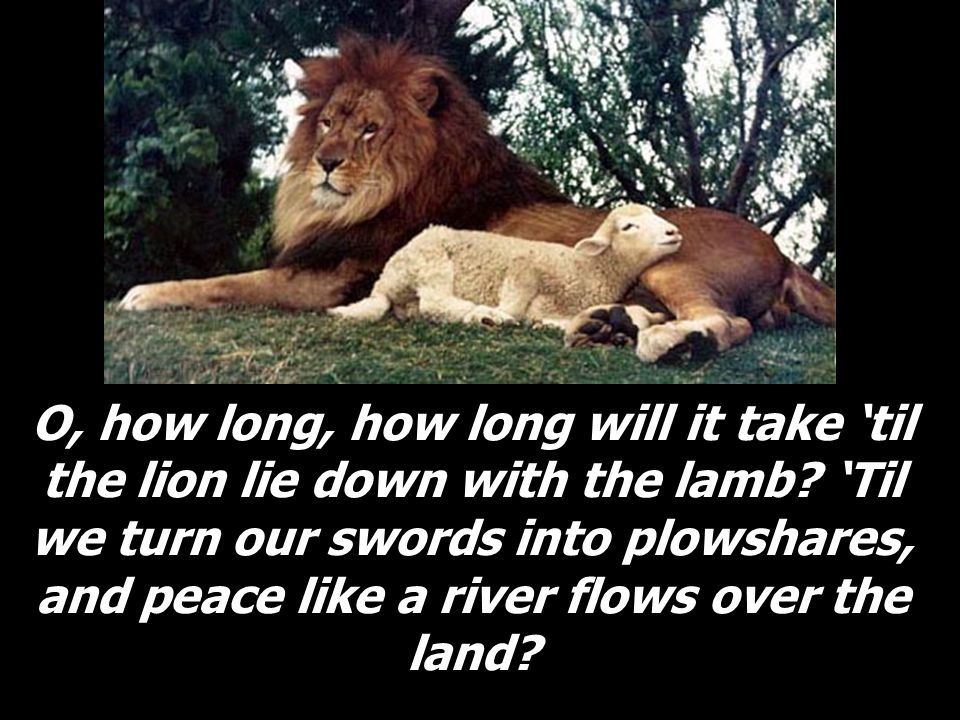 O, how long, how long will it take 'til the lion lie down with the lamb.