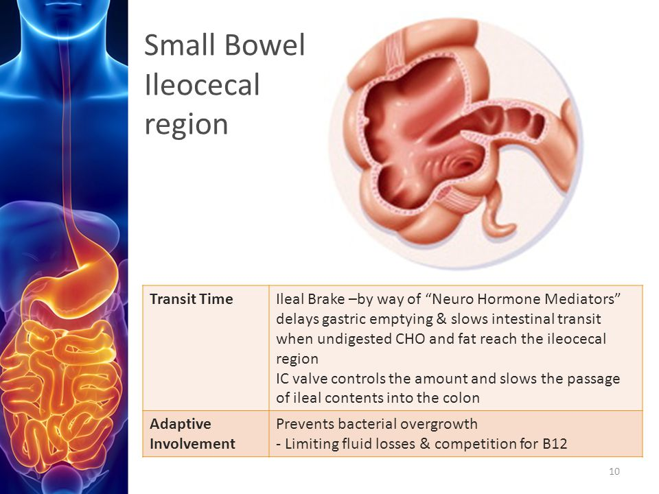 Small Bowel Ileocecal region