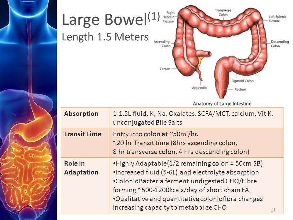 Large Bowel(1) Length 1.5 Meters