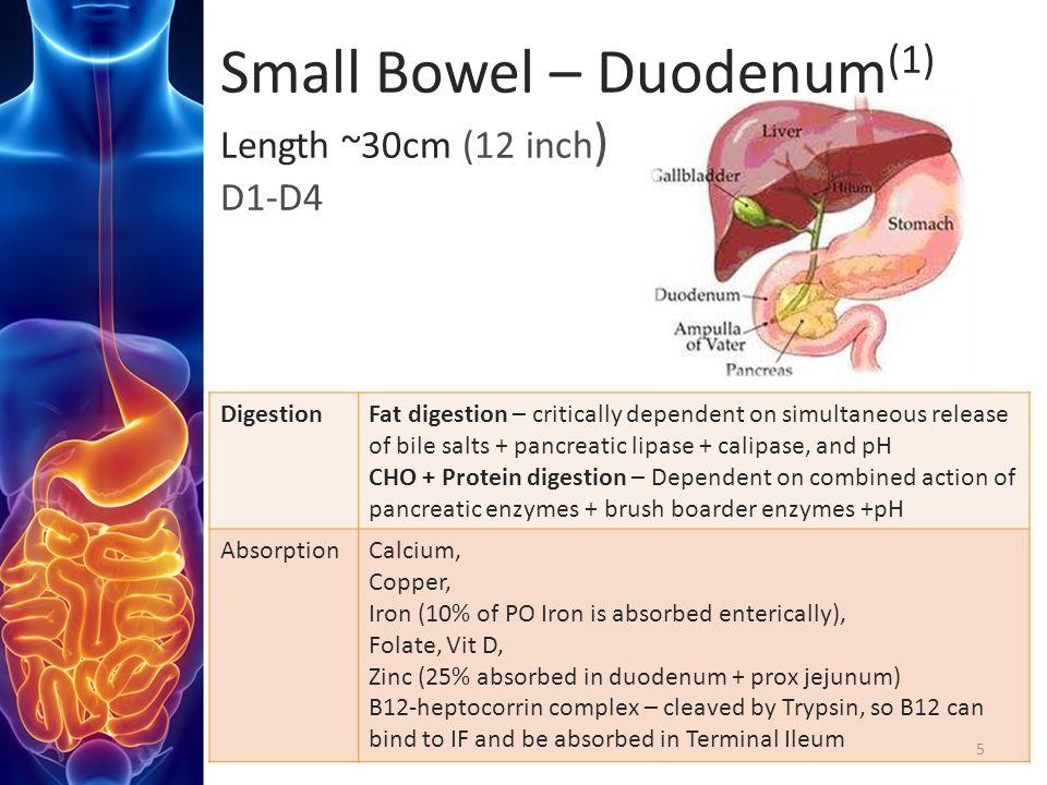 Small Bowel – Duodenum(1) Length ~30cm (12 inch) D1-D4