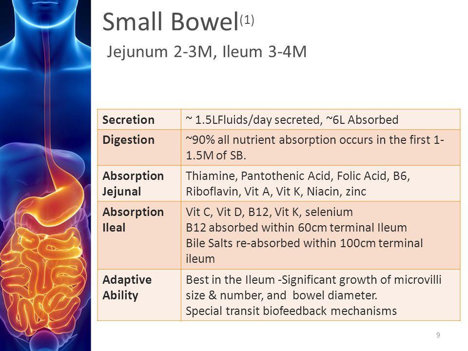 Small Bowel(1) Jejunum 2-3M, Ileum 3-4M