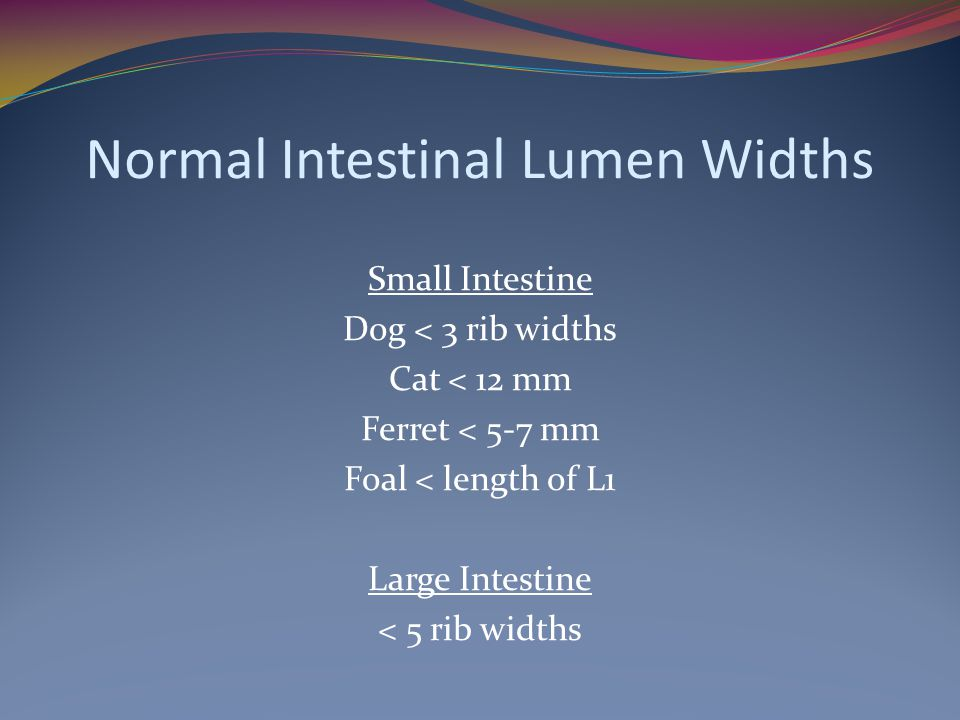 Normal Intestinal Lumen Widths
