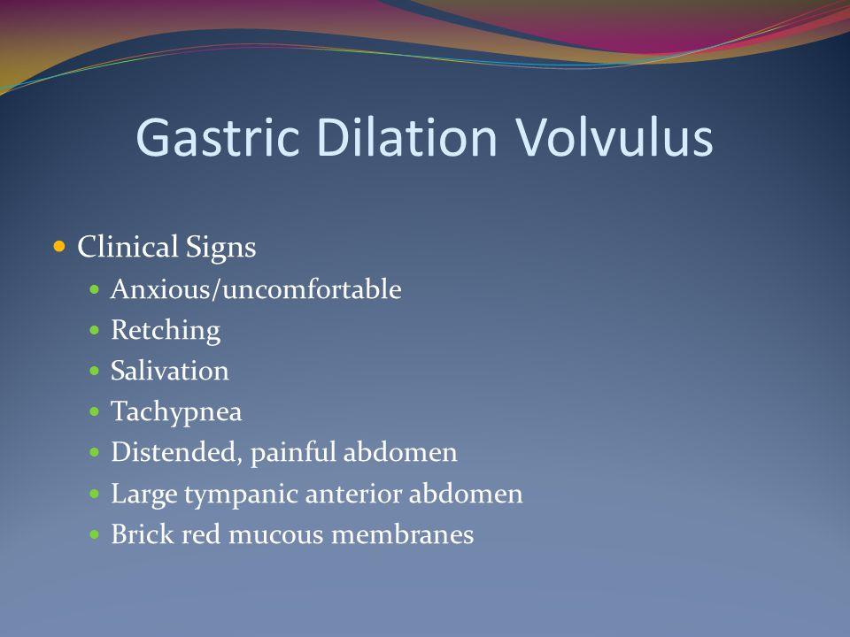 Gastric Dilation Volvulus