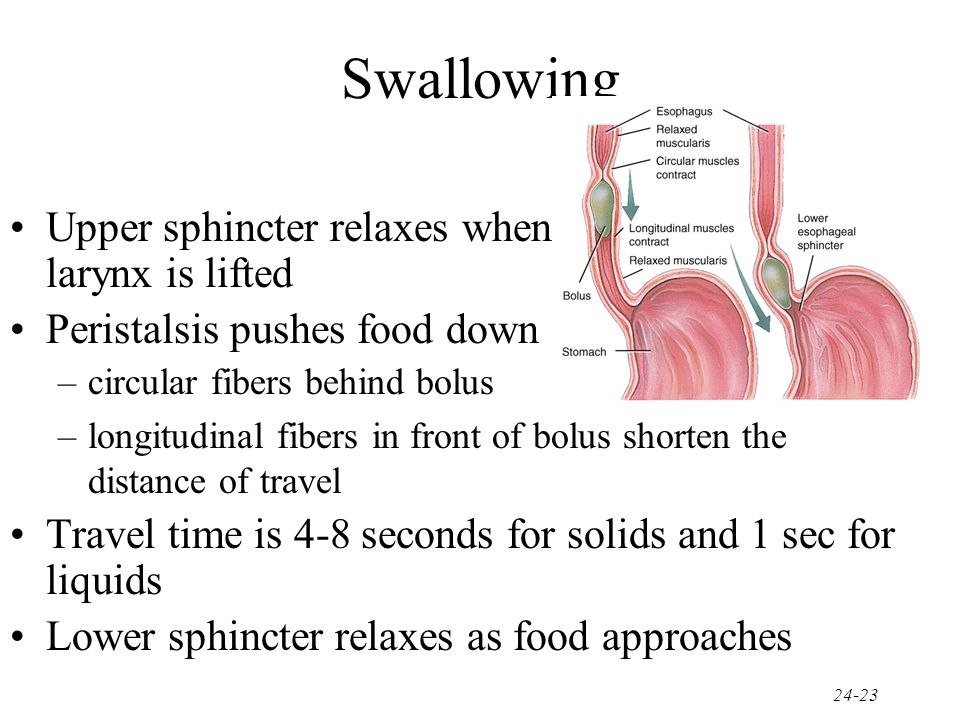 Swallowing Upper sphincter relaxes when larynx is lifted
