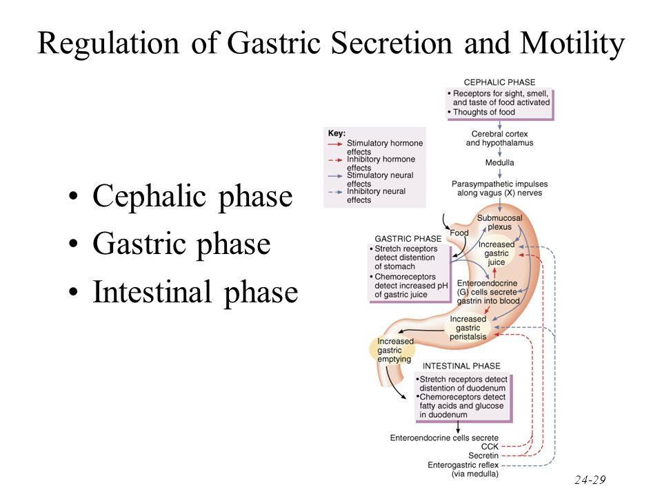 Regulation of Gastric Secretion and Motility