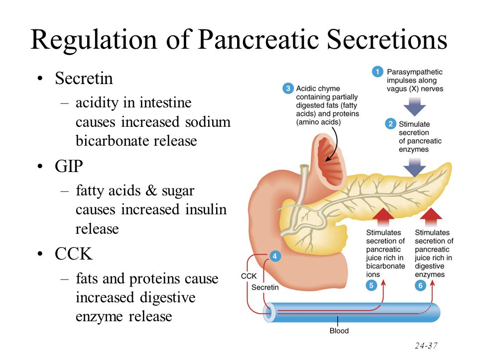 Regulation of Pancreatic Secretions