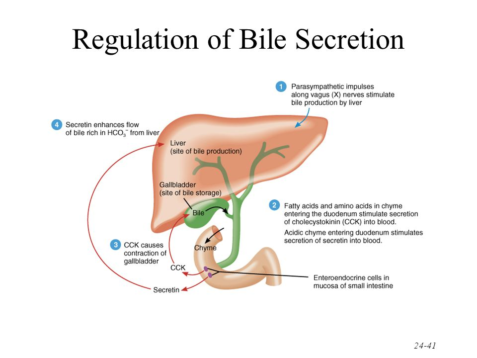Regulation of Bile Secretion