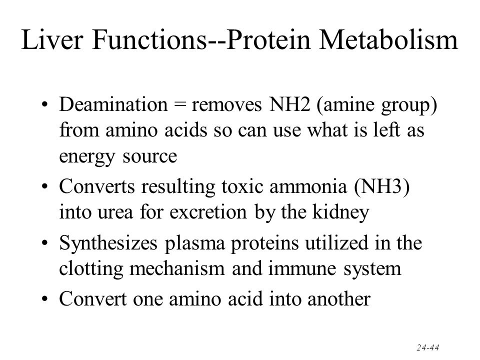Liver Functions--Protein Metabolism
