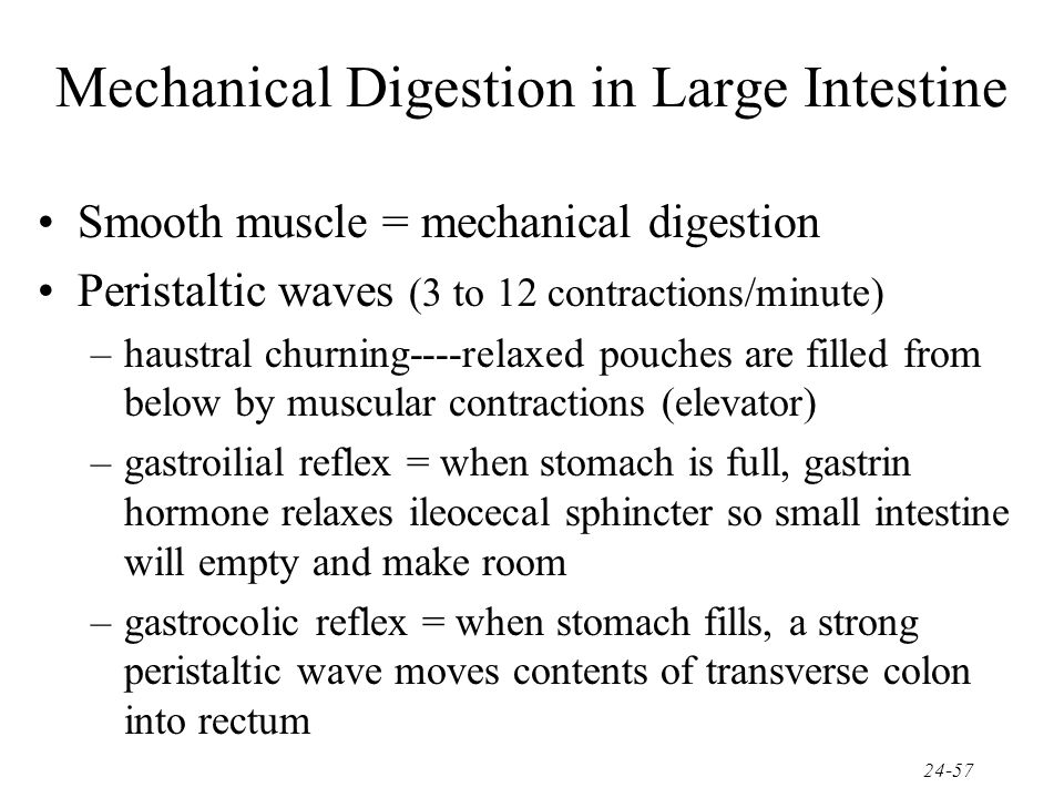 Mechanical Digestion in Large Intestine