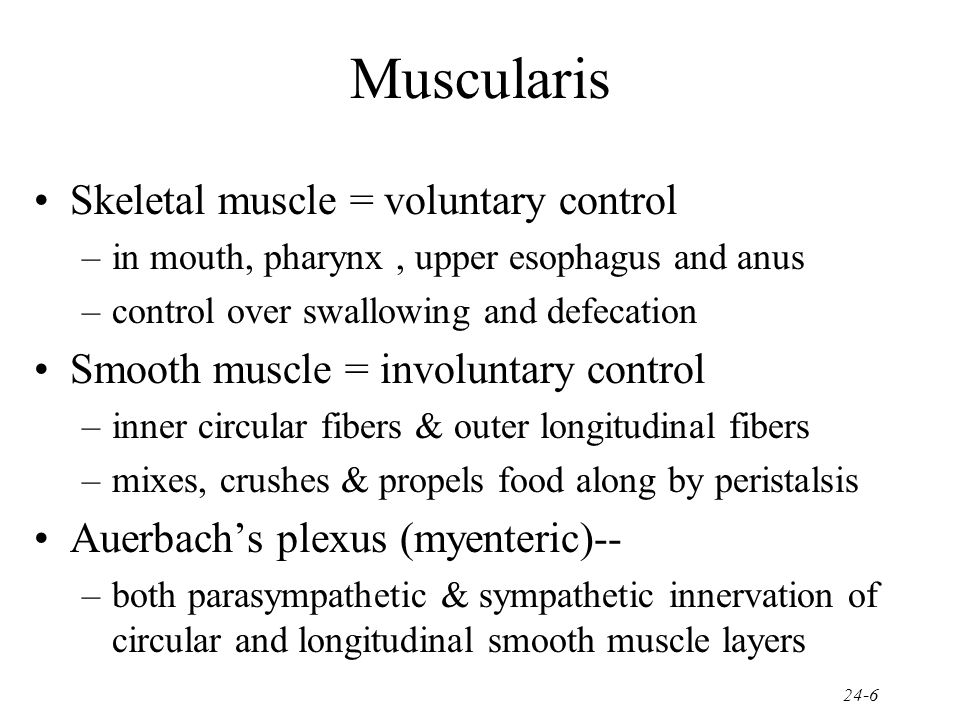 Muscularis Skeletal muscle = voluntary control