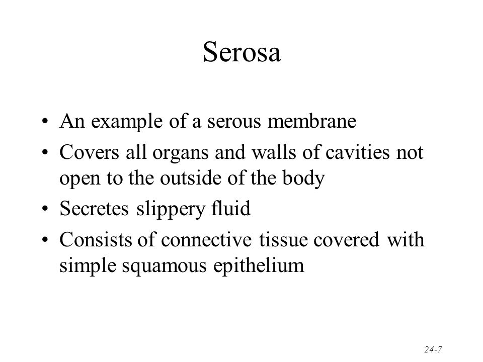 Serosa An example of a serous membrane