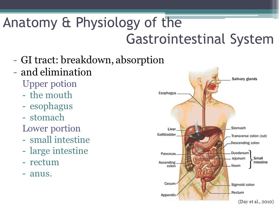 Anatomy & Physiology of the Gastrointestinal System