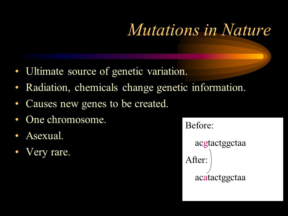 Mutations in Nature Ultimate source of genetic variation.