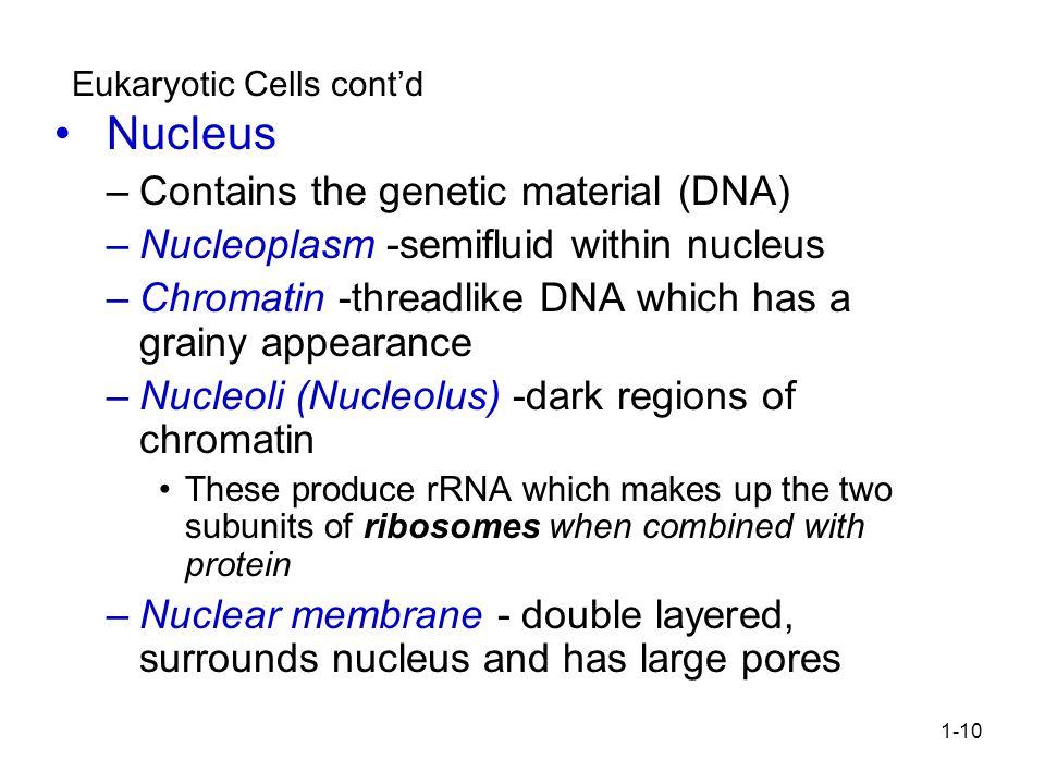Eukaryotic Cells cont'd
