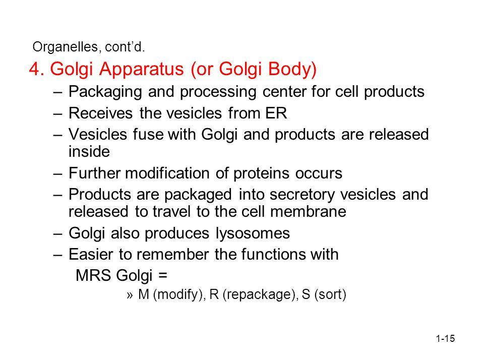 4. Golgi Apparatus (or Golgi Body)