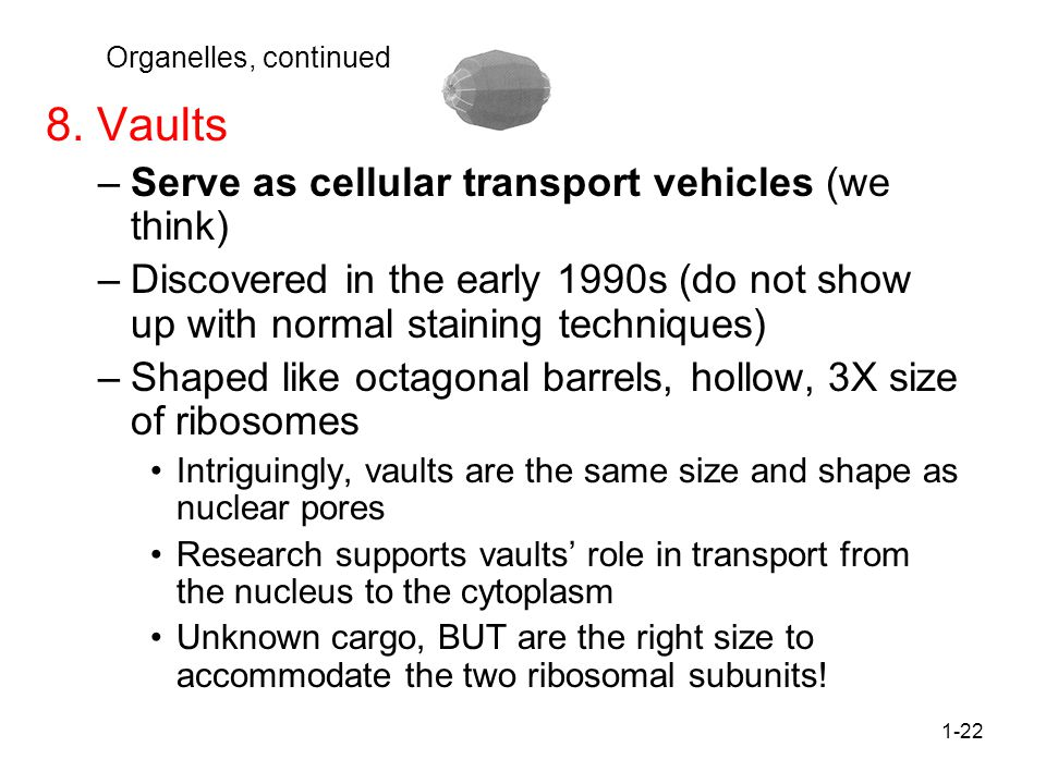 8. Vaults Serve as cellular transport vehicles (we think)