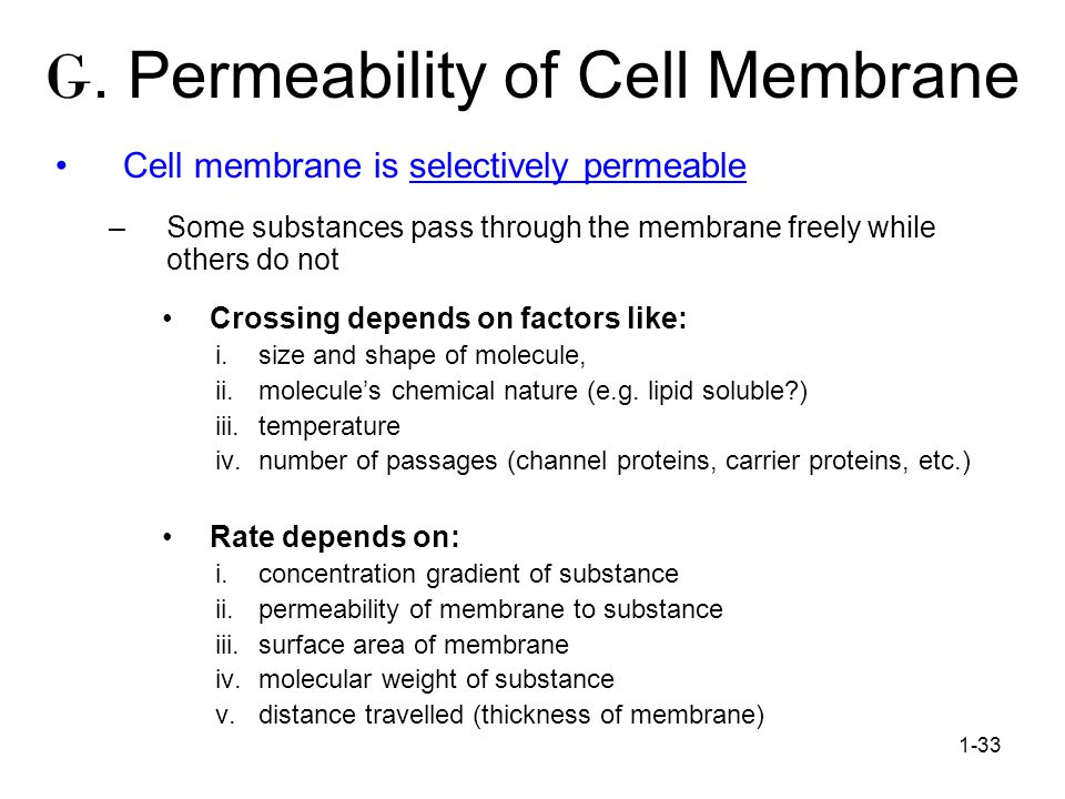 G. Permeability of Cell Membrane