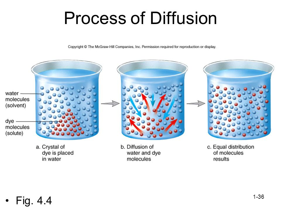 Process of Diffusion Fig. 4.4