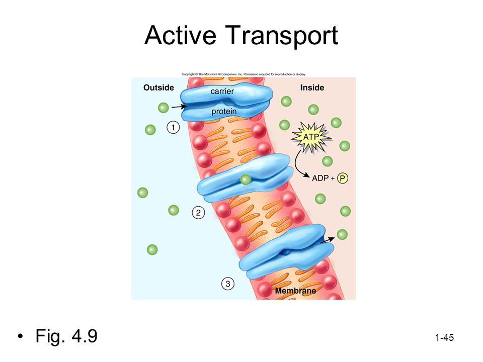 Active Transport Fig. 4.9