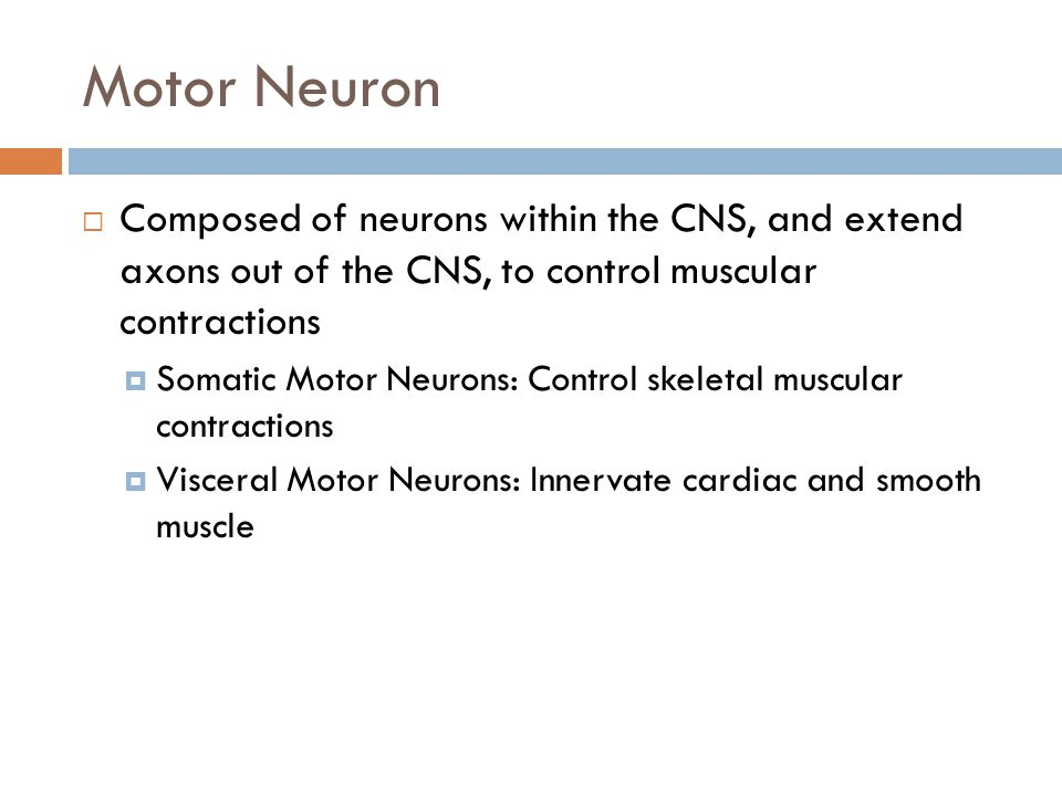 Motor Neuron Composed of neurons within the CNS, and extend axons out of the CNS, to control muscular contractions.